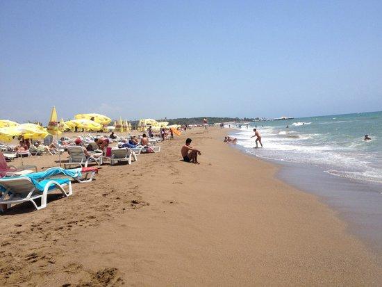 Kentia Apartments: beach