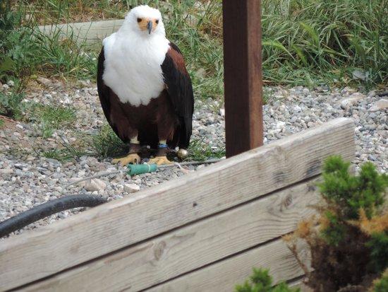 Teleferico Benalmadena : Eagle