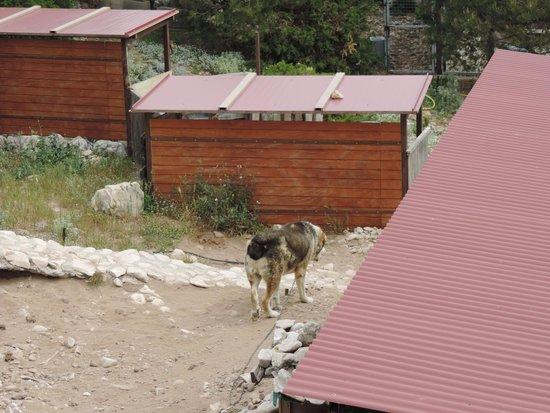 Teleferico Benalmadena : A Dog