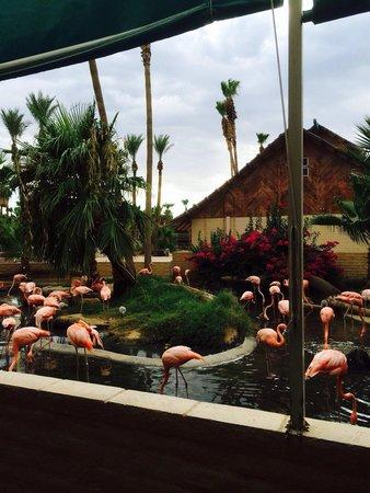 Dillon's KC BBQ : Pink flamingos next to patio. Gorgeous!