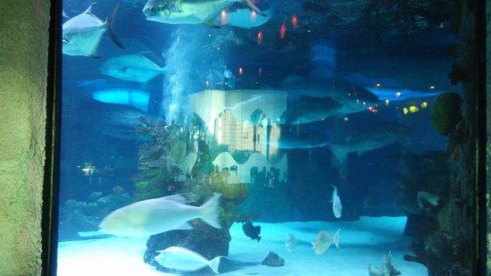 Greek Salad Picture Of Downtown Aquarium Houston