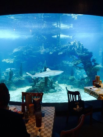 Dillon's KC BBQ : Dinner with a show!!! Lots of sharks.