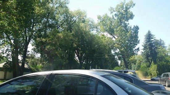 Riley Park: Parking lot