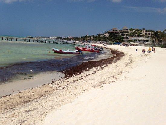 Panama Jack Resort: Seaweed