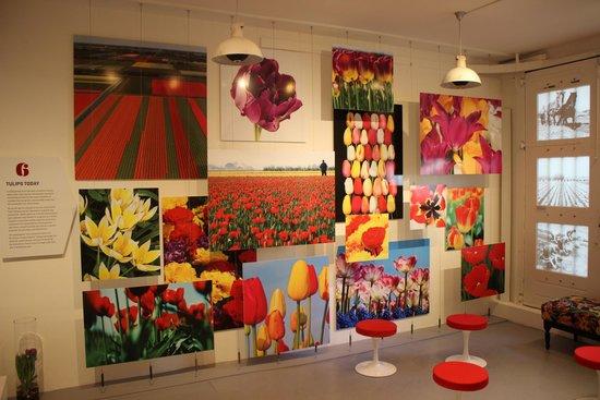 Amsterdam Tulip Museum: Tulip Museum #1