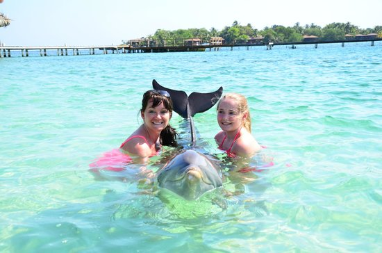"""Anthony's Key Resort : """"meeting"""" one of the dolphins before we snorkeled"""