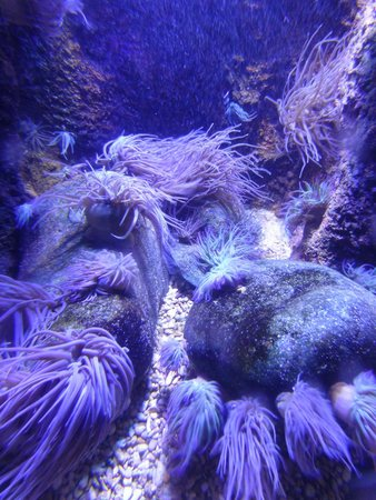 Weymouth Sea Life Park: Sea Life