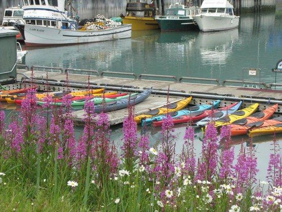 Best Western Valdez Harbor Inn: Thh harbor and the kayaks