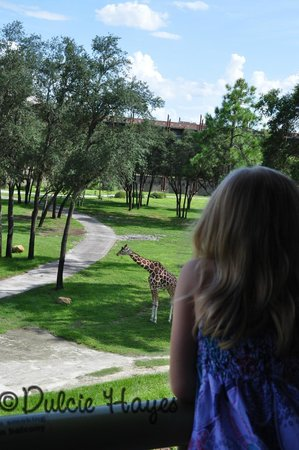 Disney's Animal Kingdom Villas - Kidani Village: From our balcony