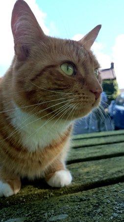 The Pheasant Inn: The resident puss cat!