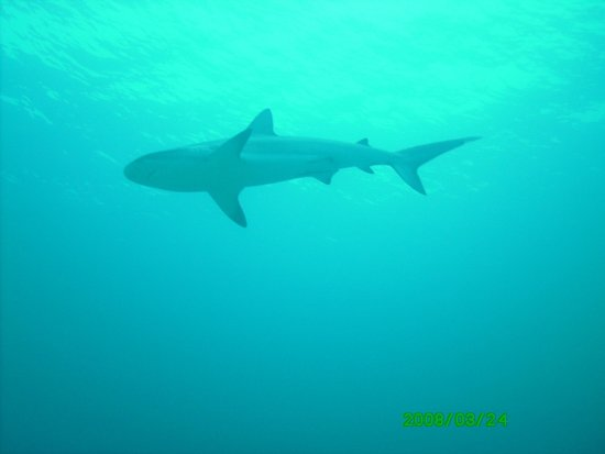 Isla de Gran Ábaco: You wanted to see a shark?