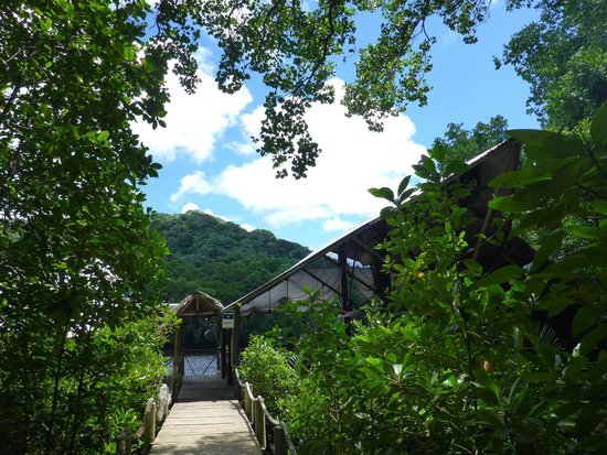 Pacific Treelodge Resort: Walkway to Bully's restaurant.