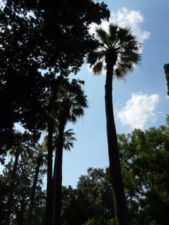 National Gardens: un palmier