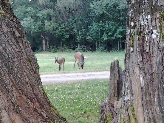 Camping Natura Le Quite : famiglia di cervi al pascolo
