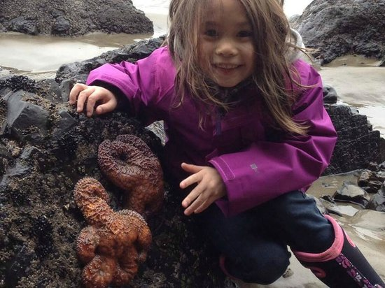 Harborview Inn & RV Park: Nearby tidepools teeming with sea lif