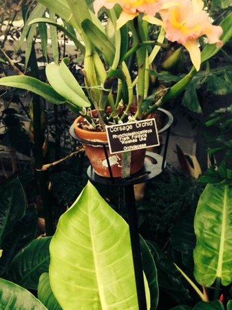 Lewis Ginter Botanical Garden : LOUIS GINTER GARDENS & FLOWERS
