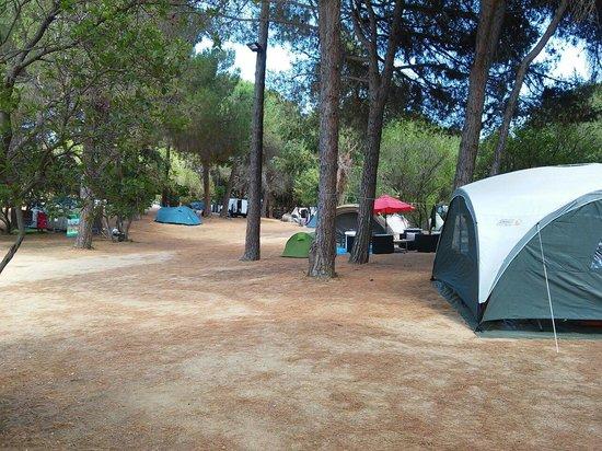 California Camp Fett in jugendlich