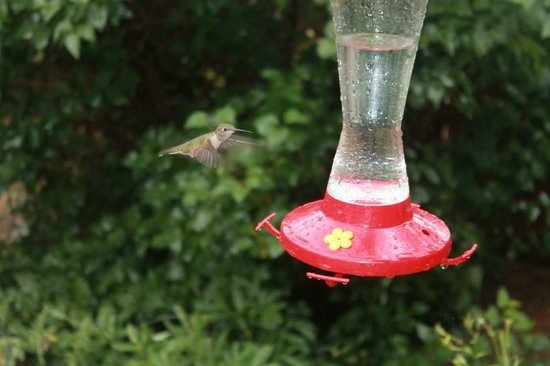 Keno's Llama Ranch & Guest House: Humming bird on the front porch of the main house
