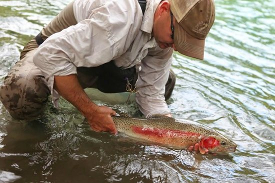 Valley Fishing Guides Day Trips: Trout BC style!