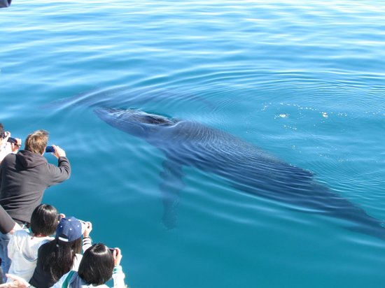 Quick Cat II - Hervey Bay Whale Watch: Watching us