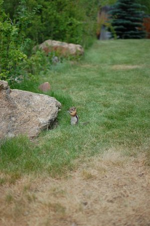 Deer Crest Resort : A chipmunk by the creek