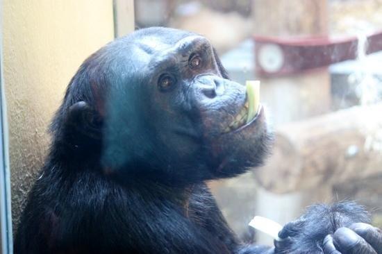 Monkey World: cheeky Monkey