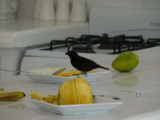Marigot Beach Club and Dive Resort: visitor if food left unattended