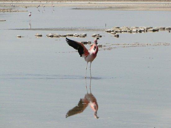Reserva Nacional de Flamencos : Perto dos animais