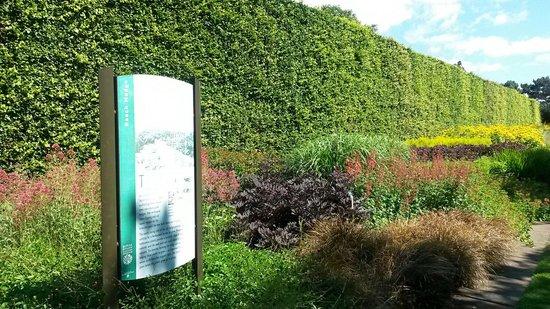 Royal Botanic Garden Edinburgh: ... amazing hedge!