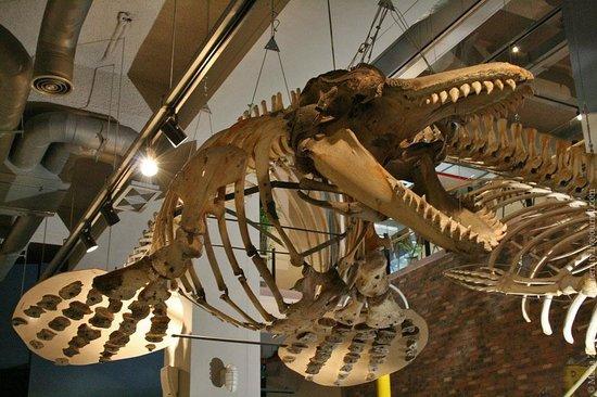 Jangsaengpo Whale Museum: Скелеты