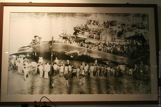 Jangsaengpo Whale Museum: Фотографии прошлого