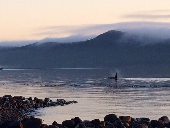 Wildcoast Adventures - Day Tours: Orcas next to the camp beach