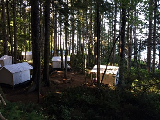 Wildcoast Adventures: The luxury tents are located in a beautiful rainforest canopy.