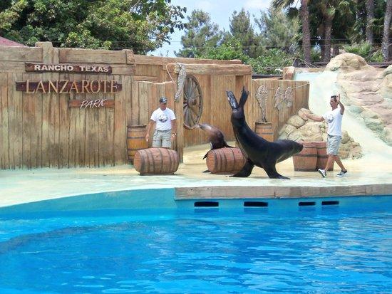 Rancho Texas Lanzarote Park : sealion show