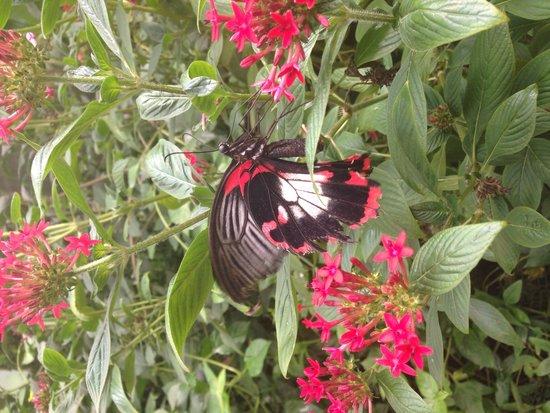 Straffan Butterfly Farm: Photo from the Butterfly House