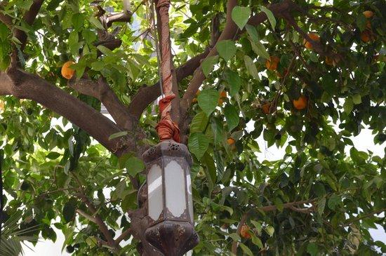 Riad Aguerzame: beautiful orange trees