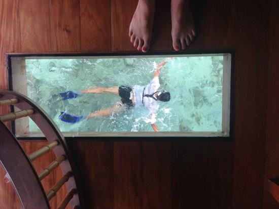 Likuliku Lagoon Resort Over Water Bure Me Swimming Under The Glass Floor