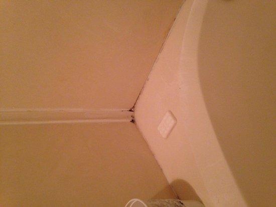 Mainsail Resort : Mole in the bath room