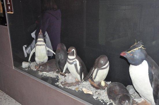 Havanna Museo del Chocolate : Esculturas de chocolate - pinguins