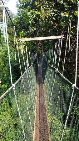 Mutiara Taman Negara : Canopy Walk