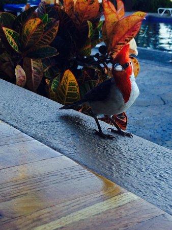 Royal Lahaina Resort: 戶外餐廳