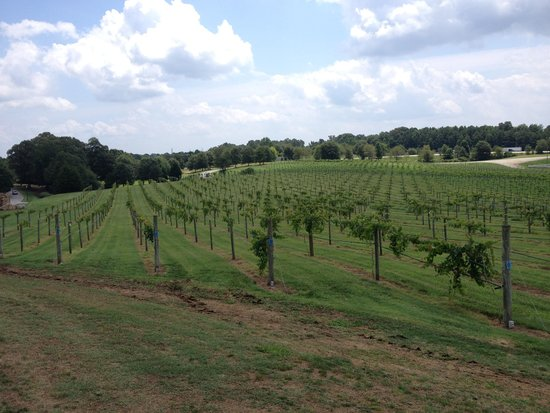 Chateau Elan Winery And Resort : muscadry