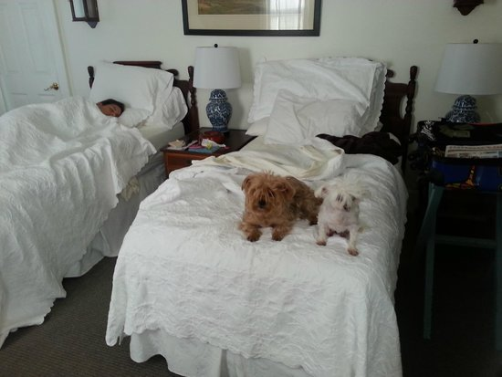Safe Harbor Guest House : Dont wake her up!!