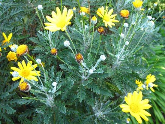 Umpherston Sinkhole: Flower in bloom in the Sinkhole garden