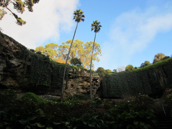 Umpherston Sinkhole: View from the bottom (morning)