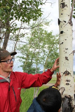 BrushBuck Wildlife Tours - Day Tours: The fabulous Trevor, explaining the bark of the aspen