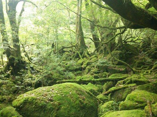Волшебство - Picture of Shiratani Unsuikyo Valley, Kumage-gun Yakushima-cho -...