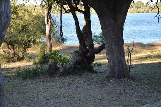 Victoria Falls River Lodge - Zambezi Crescent: View from Common Area