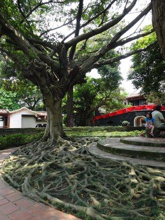 The Lin Family Mansion and Garden: Banyan tree