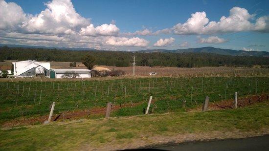 Kangarrific Tours: Vineyard